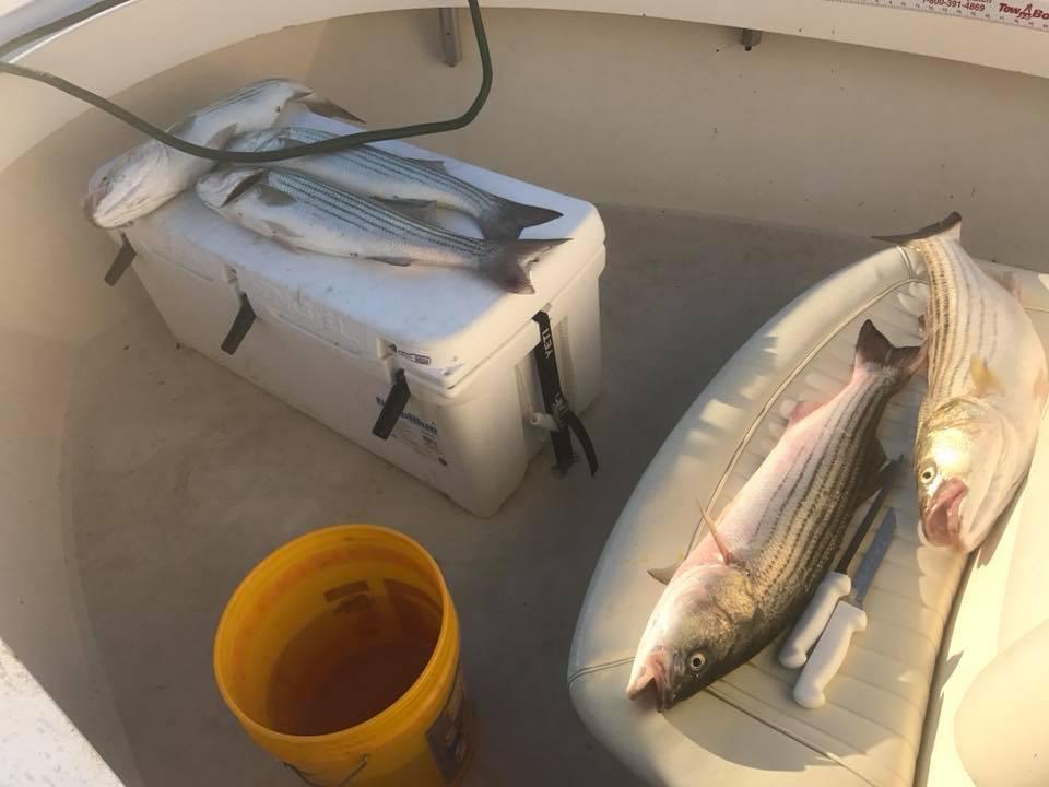 Striper Charter fishing MA Capt.jpg