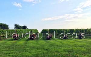 Are you a Loudoun Local? Join our network!