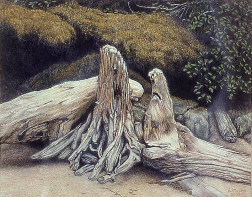 driftwood_gathering.jpg