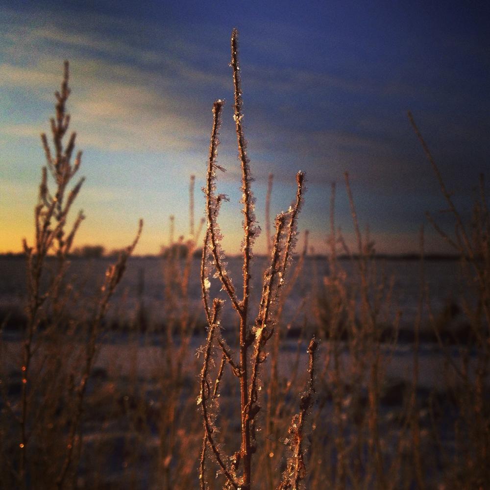 Frost in morning light.