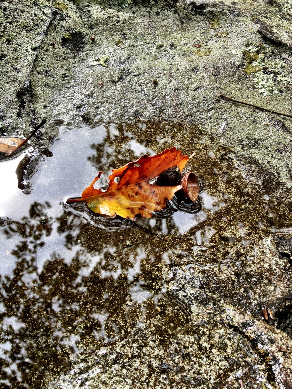 Scenes of fall