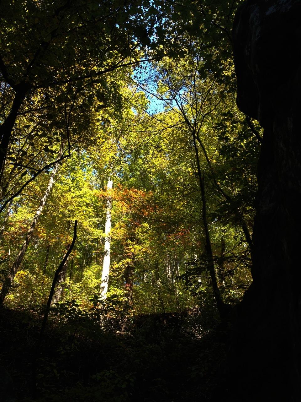 trees-in-dayton.jpg