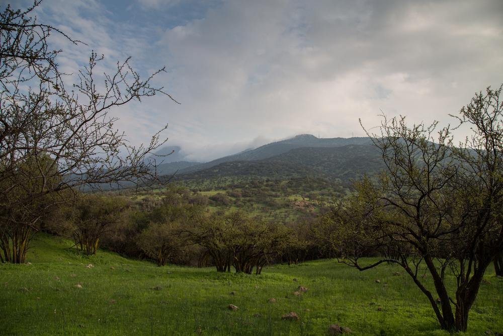 Landscape near Santiago.
