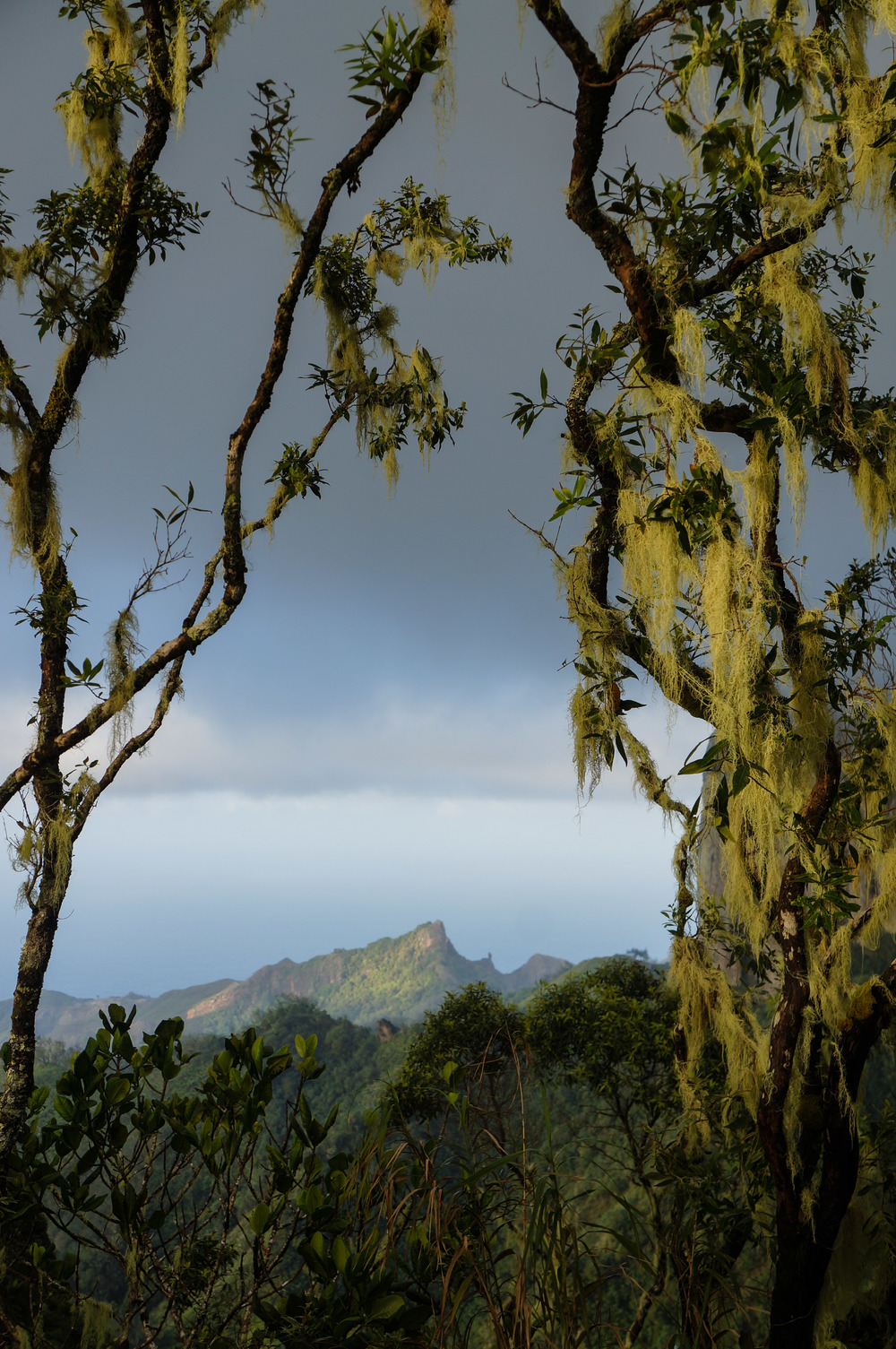 Moss-covered trees and the view of the Pacific Ocean.