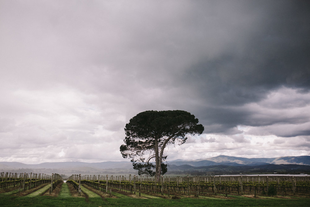 S+C-Blog Stones Of The Yarra-Dean Raphael-Melbourne Wedding Photographer-56.jpg