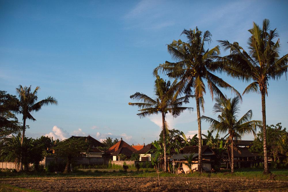 Ubud Bali 2017-Dean Raphael-16.jpg