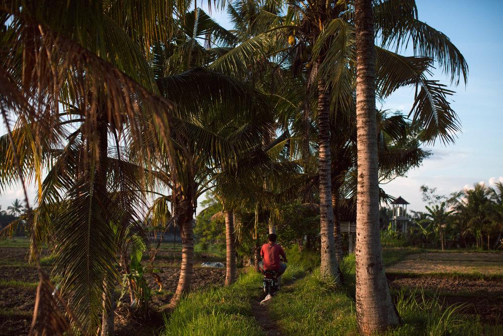 Ubud Bali 2017-Dean Raphael-17.jpg