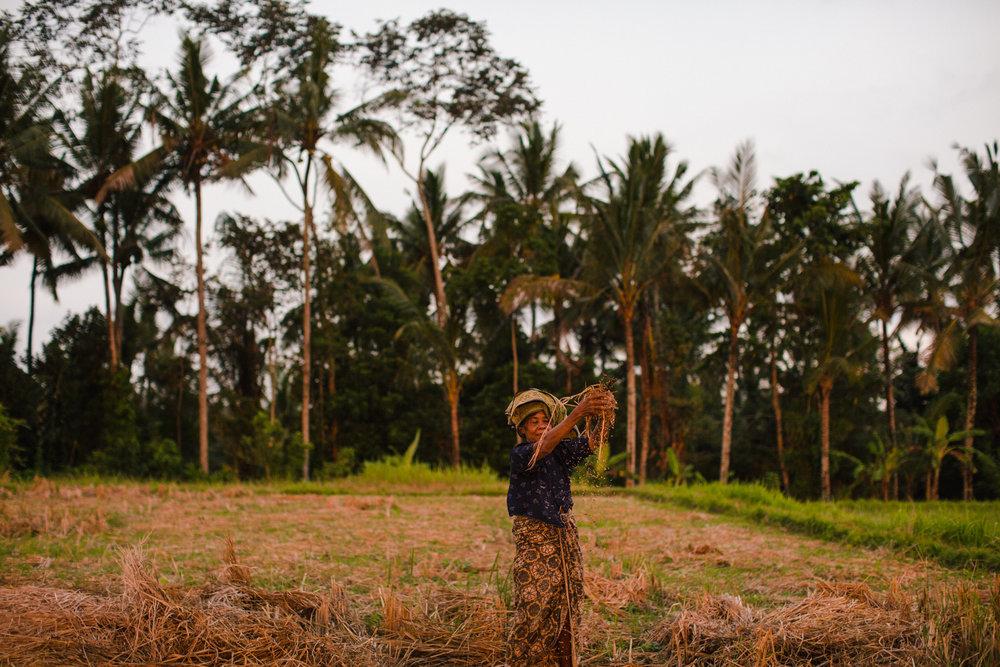 Ubud Bali 2017-Dean Raphael-25.jpg