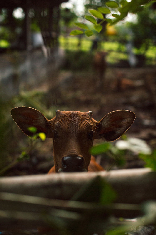 Ubud Bali 2017-Dean Raphael-31.jpg