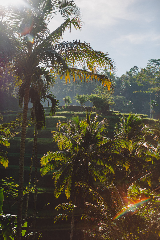Ubud Bali 2017-Dean Raphael-91.jpg