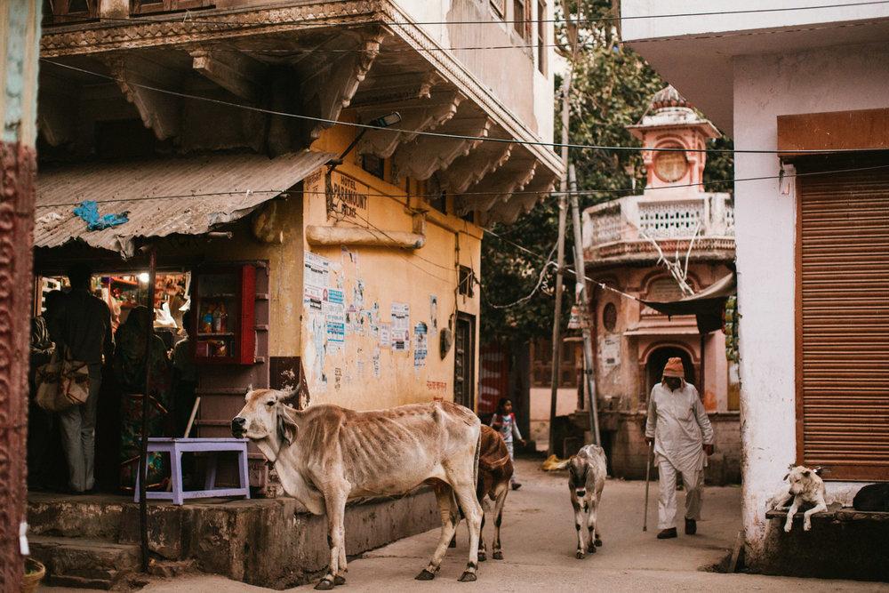 Pushkar Nov 2017-Dean Raphael Photography-21.jpg