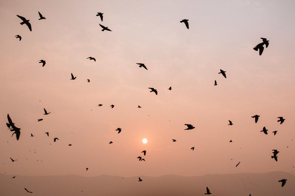 Pushkar Nov 2017-Dean Raphael Photography-23.jpg