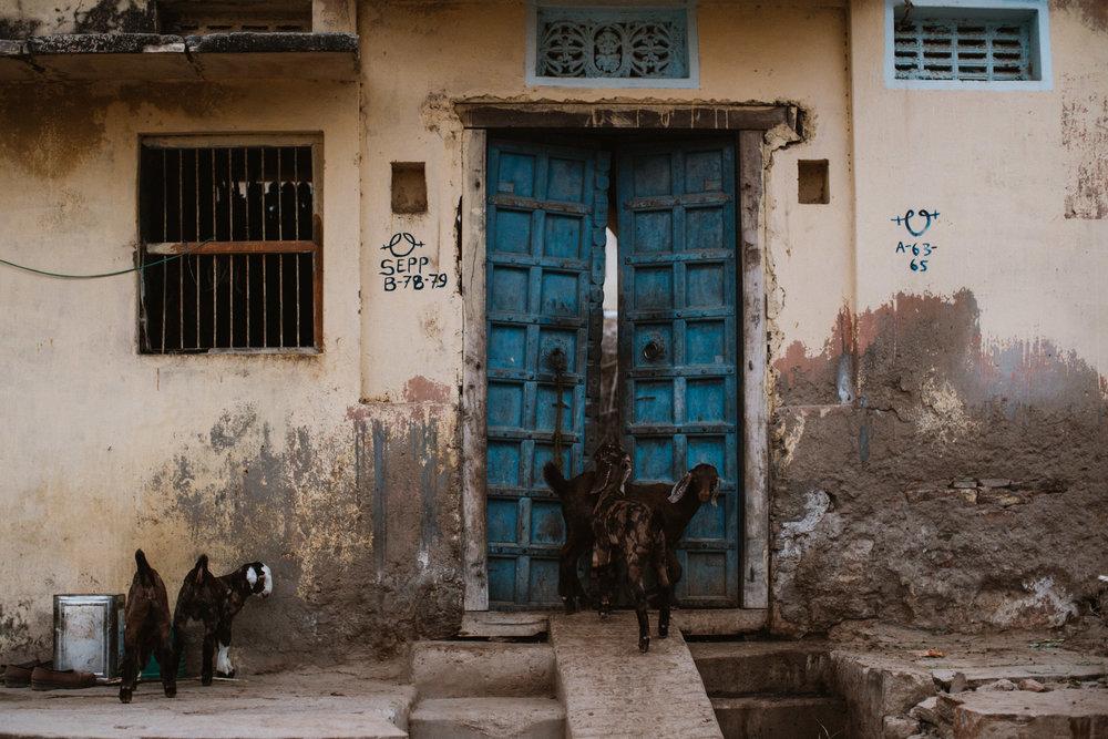 Pushkar Nov 2017-Dean Raphael Photography-43.jpg