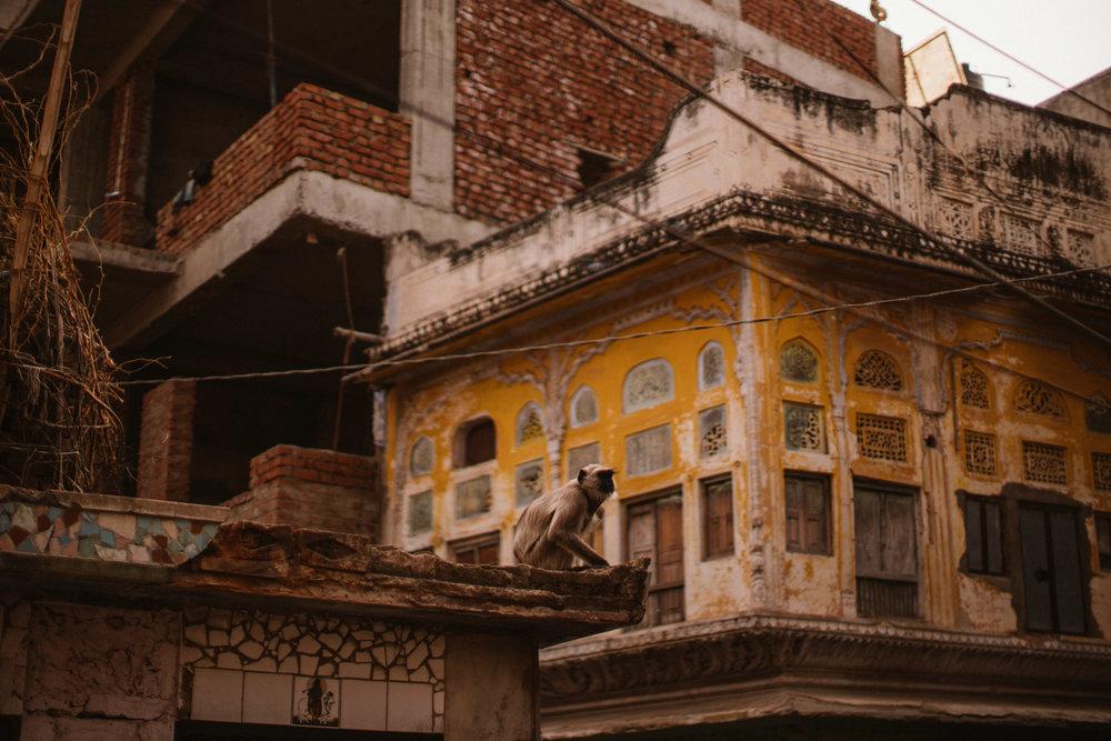 Pushkar Nov 2017-Dean Raphael Photography-48.jpg