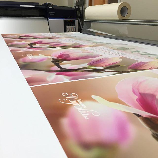 Trenger du eller din bedrift plakater? Vi leverer plakater i forskjellige størrelser, banner, gatebukker, skilt, storformat, ta kontakt for en uforpliktende samtale. Her er det laget gatebukkplakater for @froken_magnolia takk for oppdraget #plakat #storformat #skilt #trykkeri #trykksaker