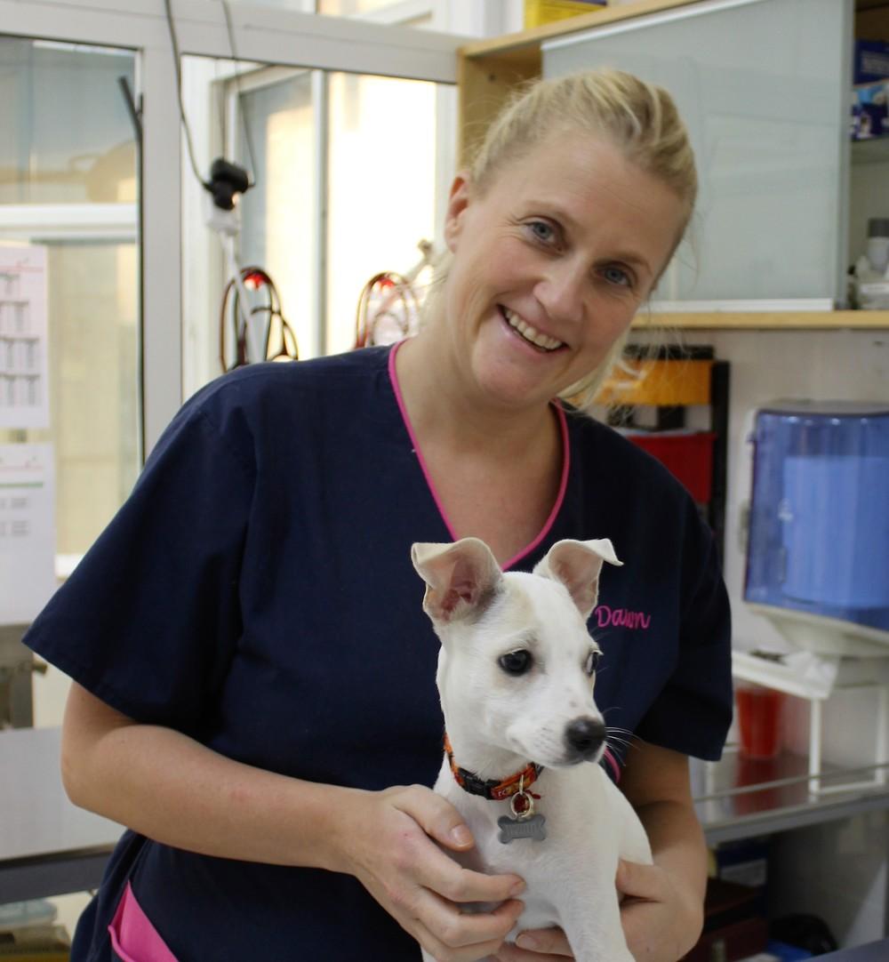 vet nurse Dawn aitken