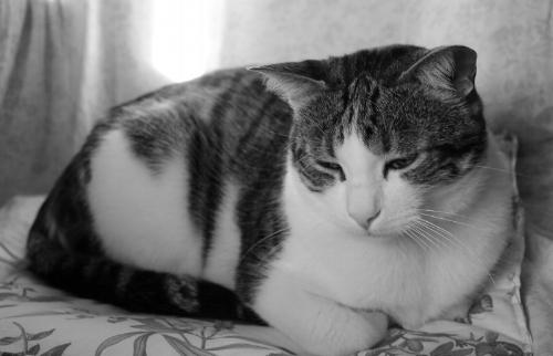 cat-2312317_1920.jpg