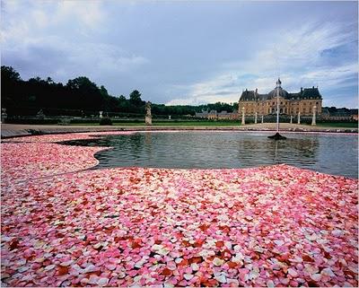 flower-lake-774395.jpg