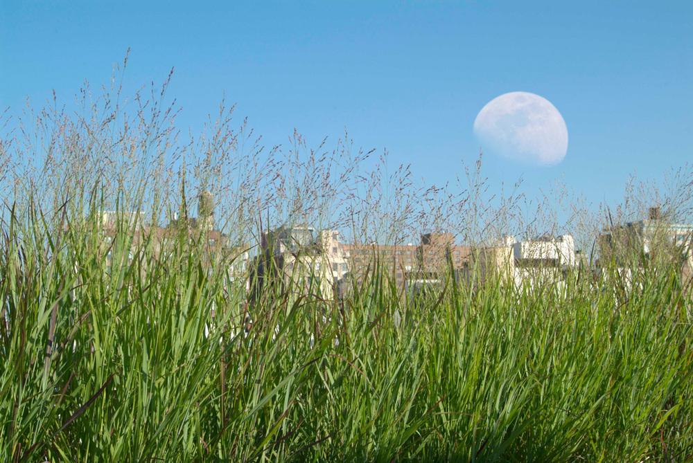 Moonrise_lowres.jpg