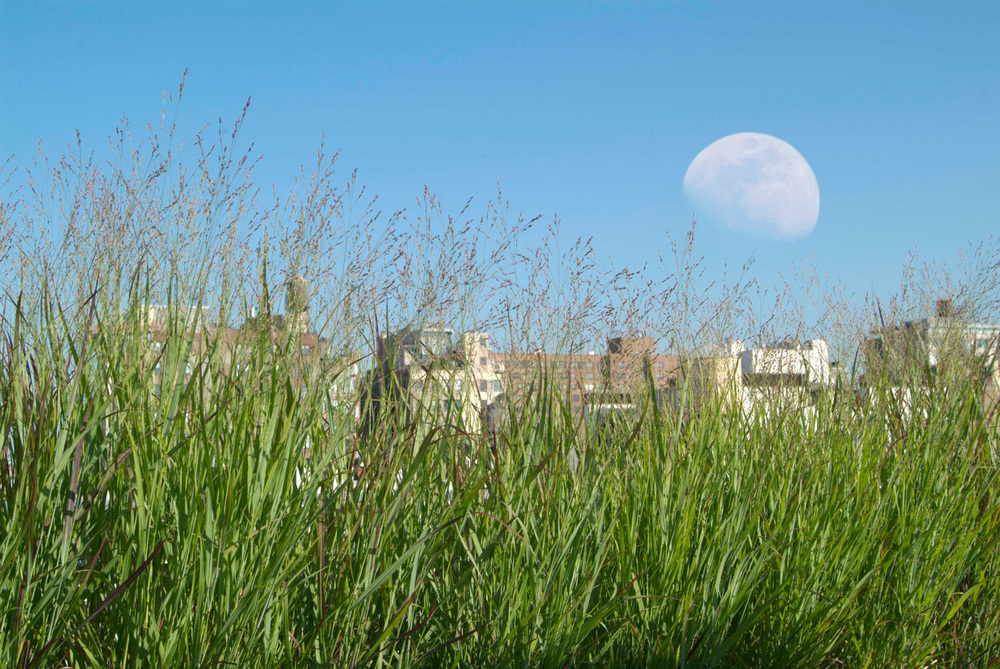 View of moonrise from Noho roof garden designed by Todd Haiman Landscape Design
