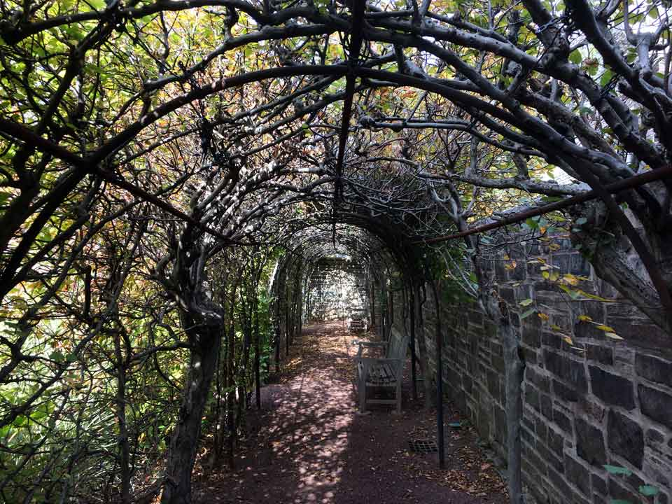 This arched pergola is created by hornbeams and piperail.  Photo ©ToddHaimanLandscapeDesign2014