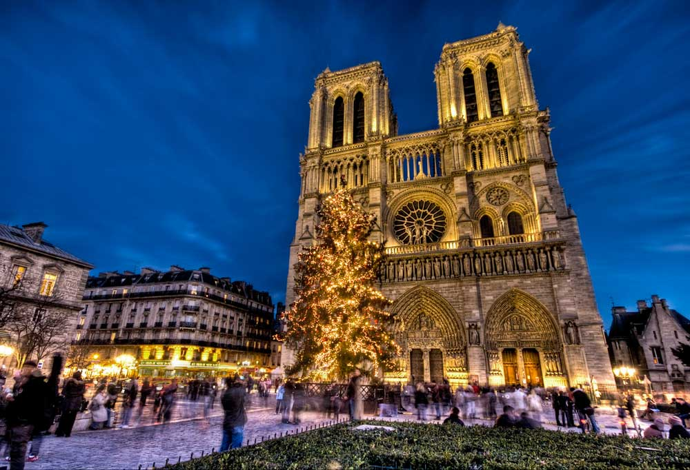 Notre Dame + tree
