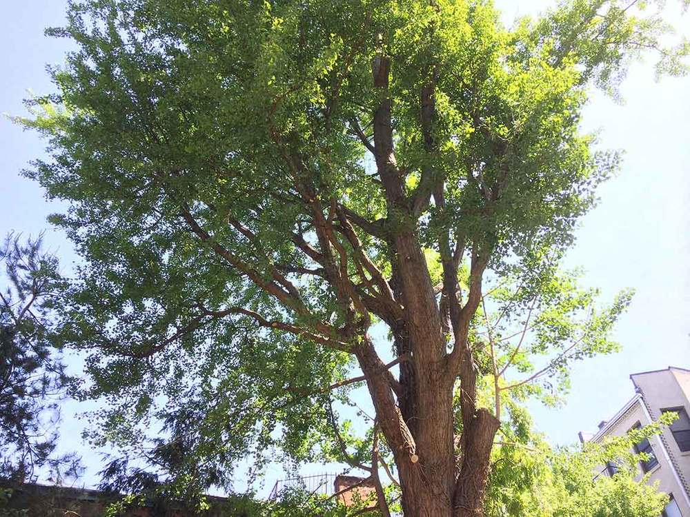 Brooklyn tree pruning