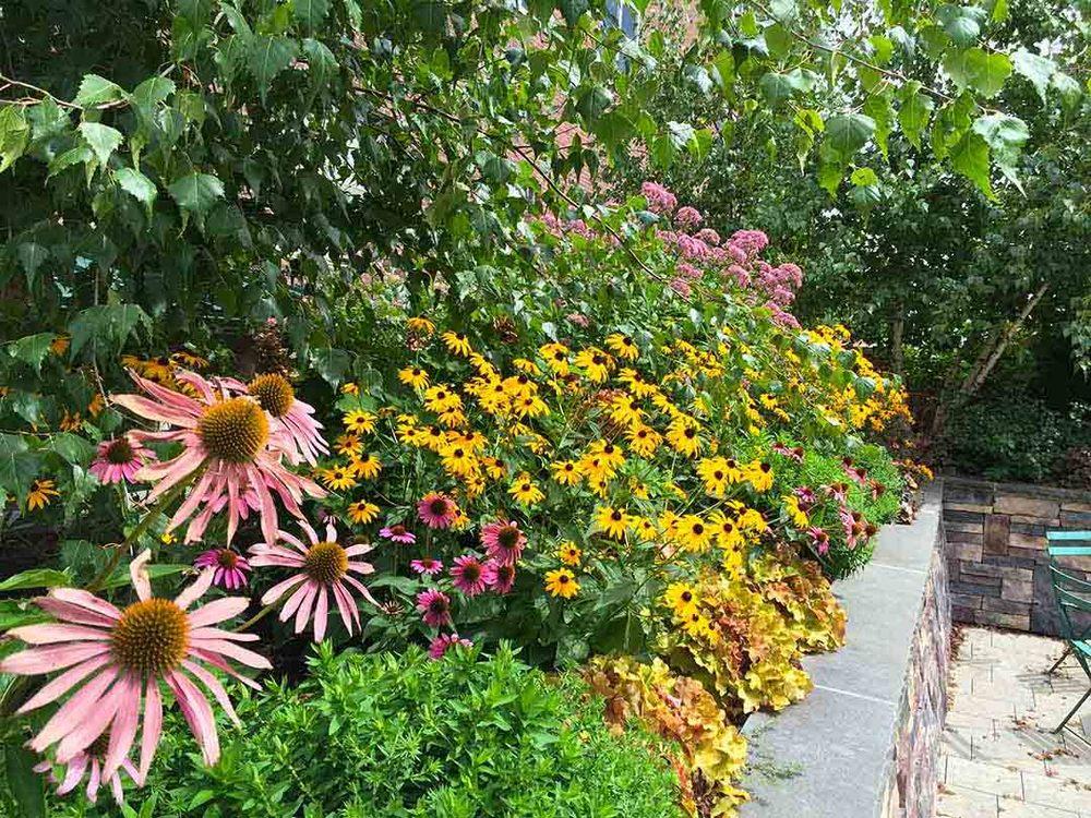Avery-garden-Summer-plants.jpg