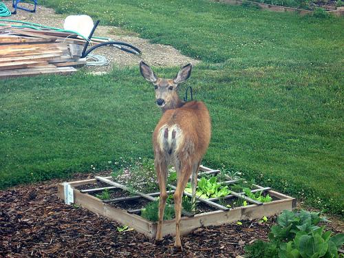 Deer and Gardens