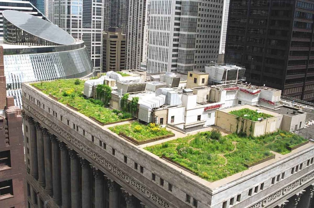 In 1991  As part of an EPA study and initiative to combat the urban heat island effect and to improve urban air quality, Mayor Richard M. Daley and the City of Chicago used City Hall as a showcase to promote green roofs.