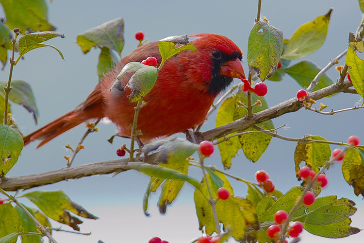 Growing native plant material on a roof garden can attract birds.