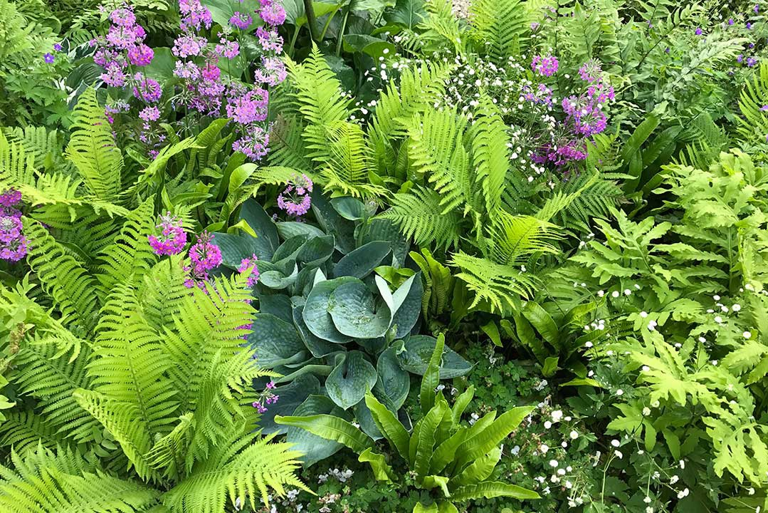 SHADE GARDENING — Todd Haiman Landscape Design on plant landscaping design, plant nursery design, plant terrarium design, plant flower garden design, plant by number garden plans, plant pots design, plant with long curly leaves, plant privacy screen design, plant trees design,