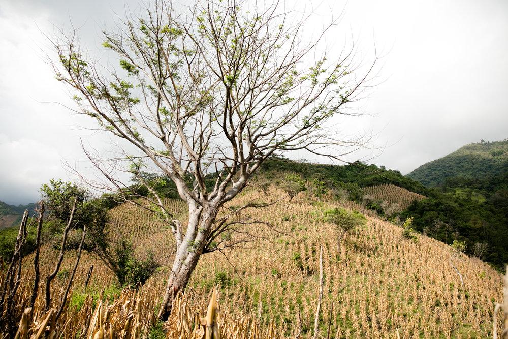 Masienda-Oaxaca-1230-Fave.jpg