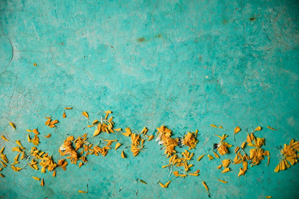 Masienda-Oaxaca-877-Fave.jpg