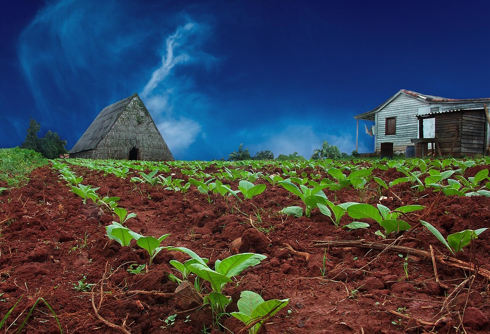 Tobacco farm ,Pinar del Rio, Cuba
