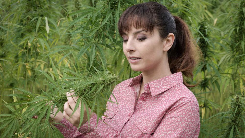 marihuana-medicinal_0.jpg