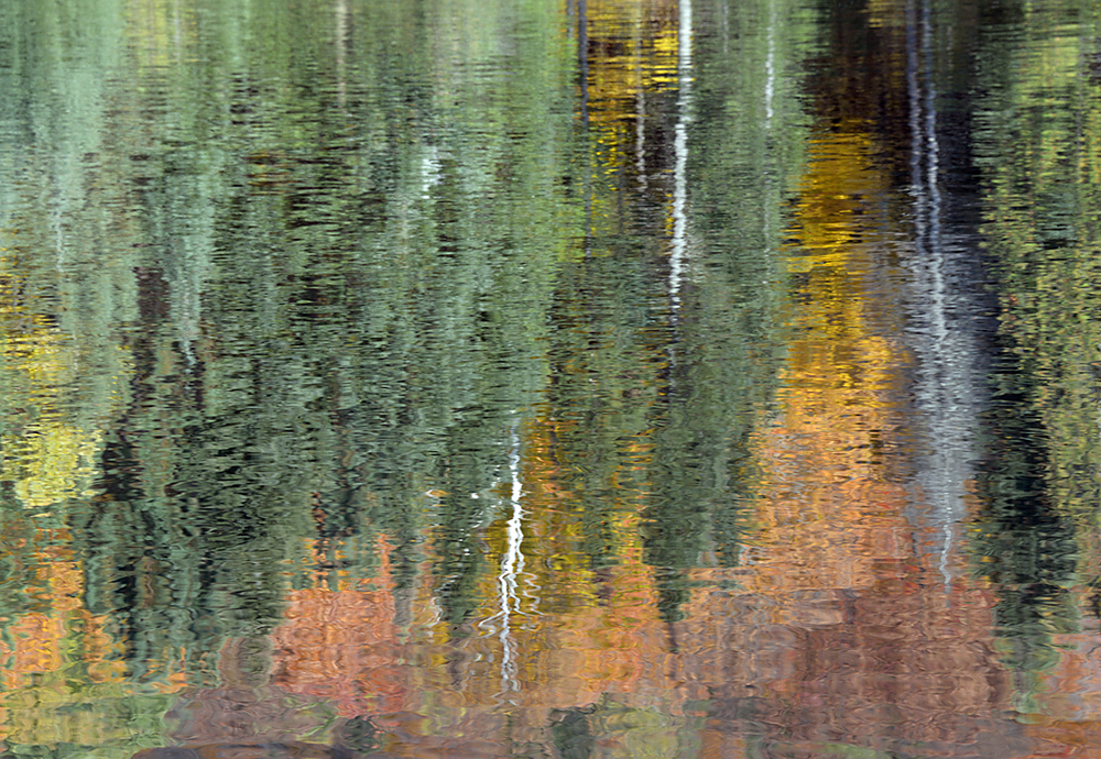 Reflected Foliage