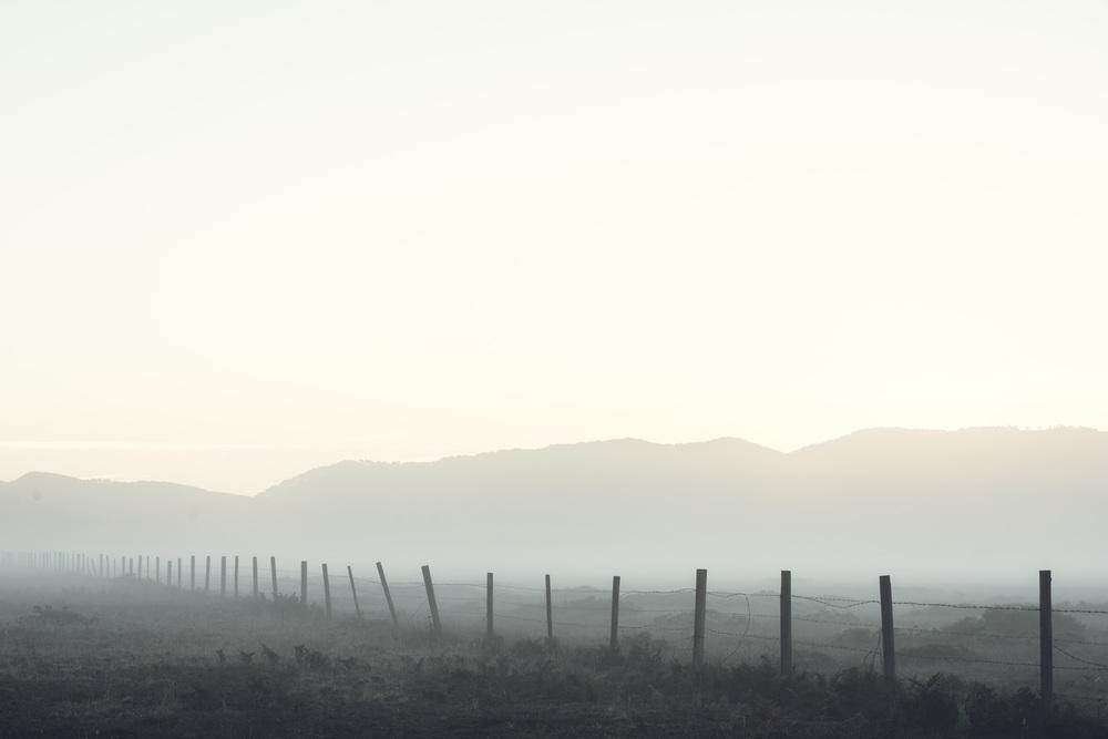 Cypress Grove-7070.jpg