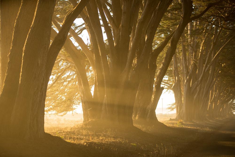 Cypress Grove-7109.jpg