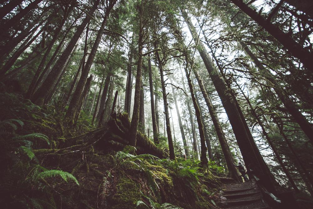 Seattle-5568.jpg