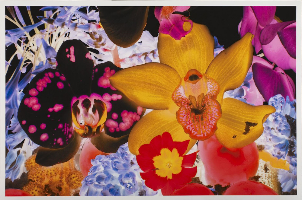 Marc Quinn  At the Far Edges of the Universe • 2010 Gravura em pigmento Edição: 59 74 x 108 cm