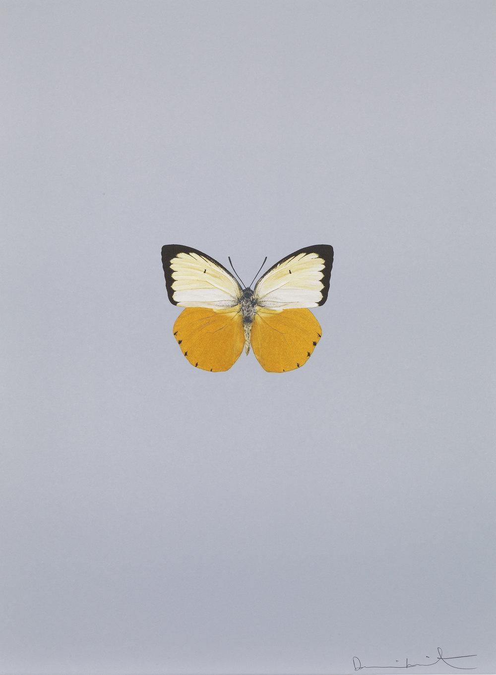 Damien Hirst    It's a Beautiful Day (cinza) •2013 Gravura polimerizada Edição: 55 66.5 x 49 cm