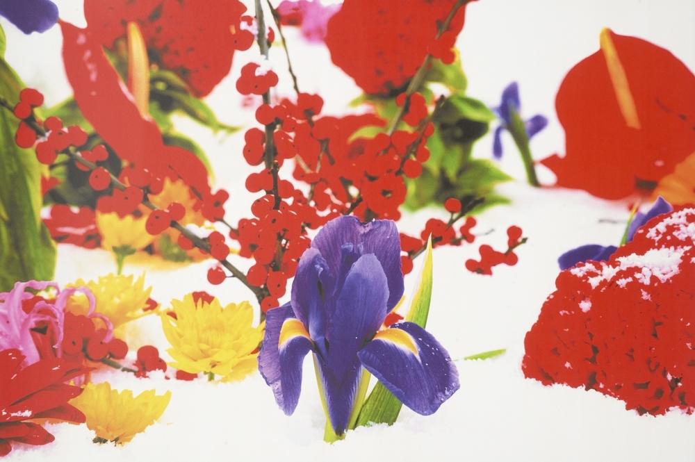Marc Quinn  Winter Garden • 2004   Gravura em metal   Edição: 59   83.5 x 124 cm
