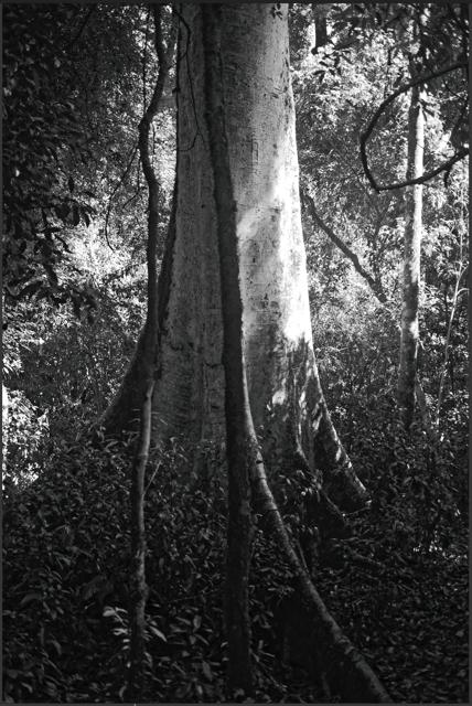 André Paoliello  sem título  2016  impressão sobre papel  153,5 x 103,5 cm