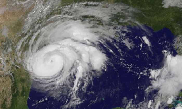 harvey-goes-82517_0.jpg