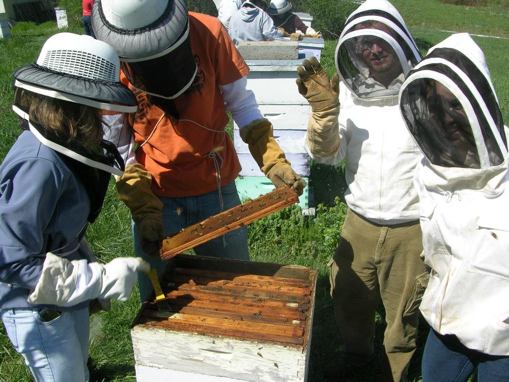 beekeeping.jpg