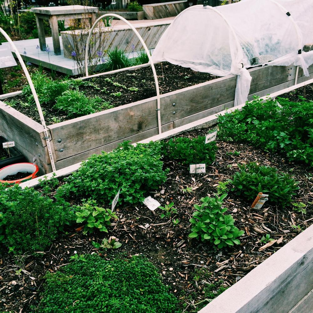 edible gardening in raised beds.