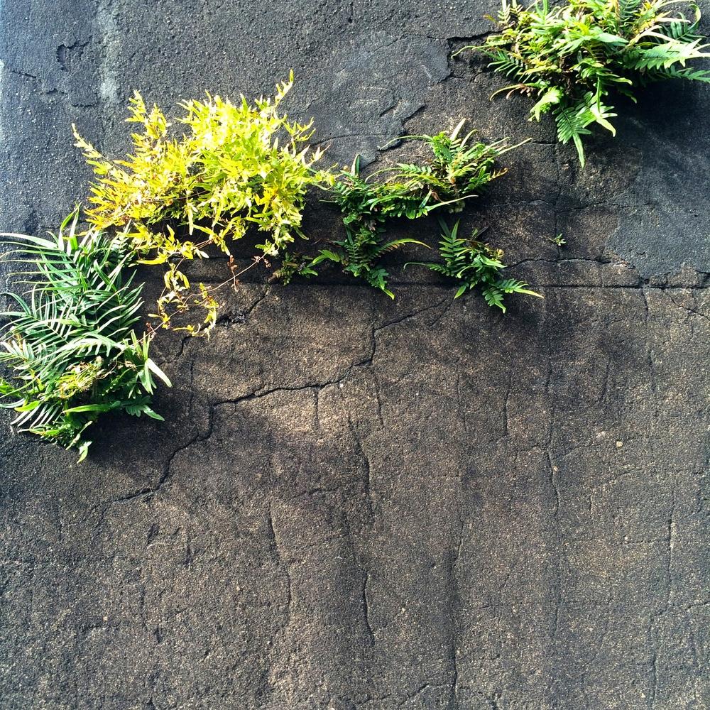 ferns-wall-cemetery