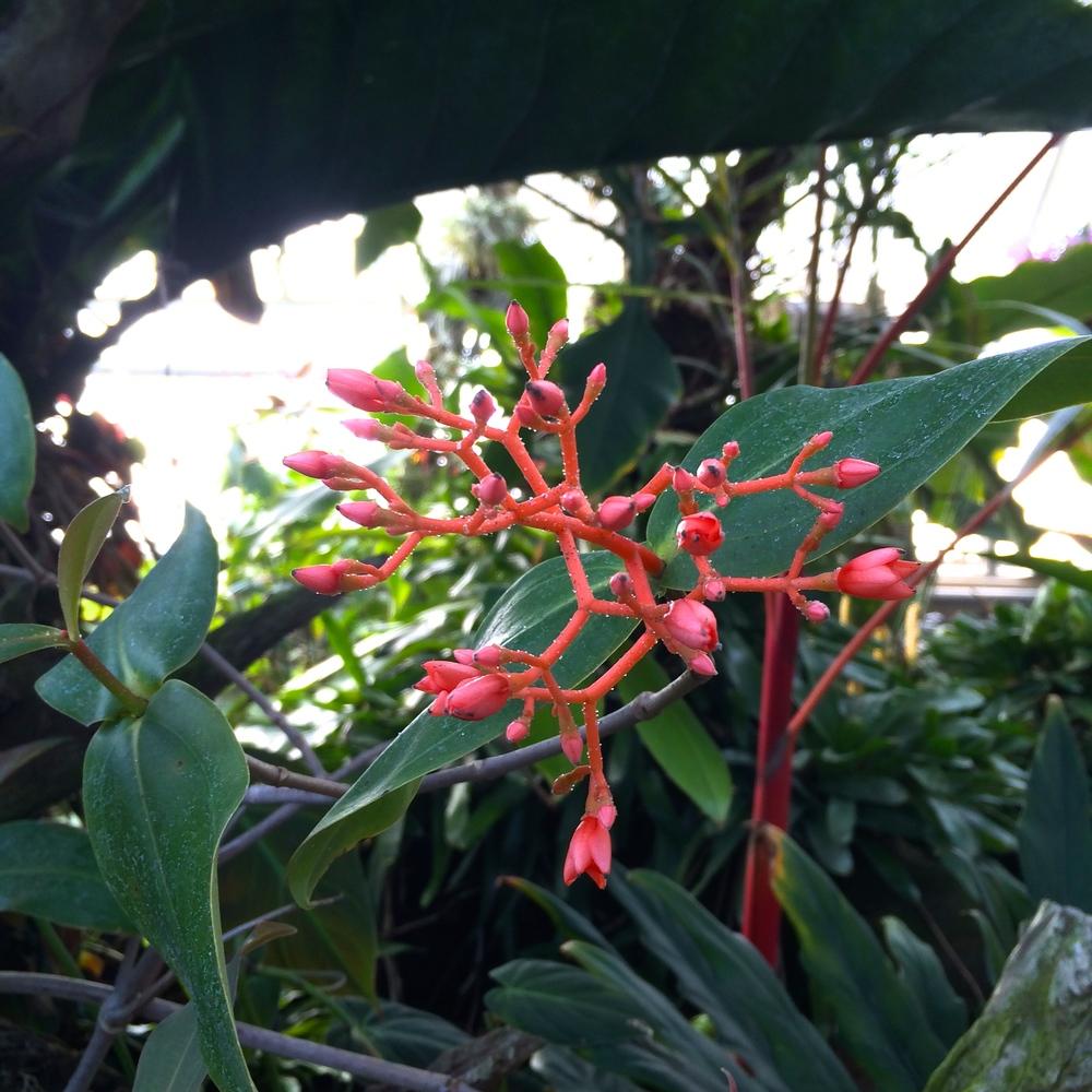 greenhouse-plant-pink