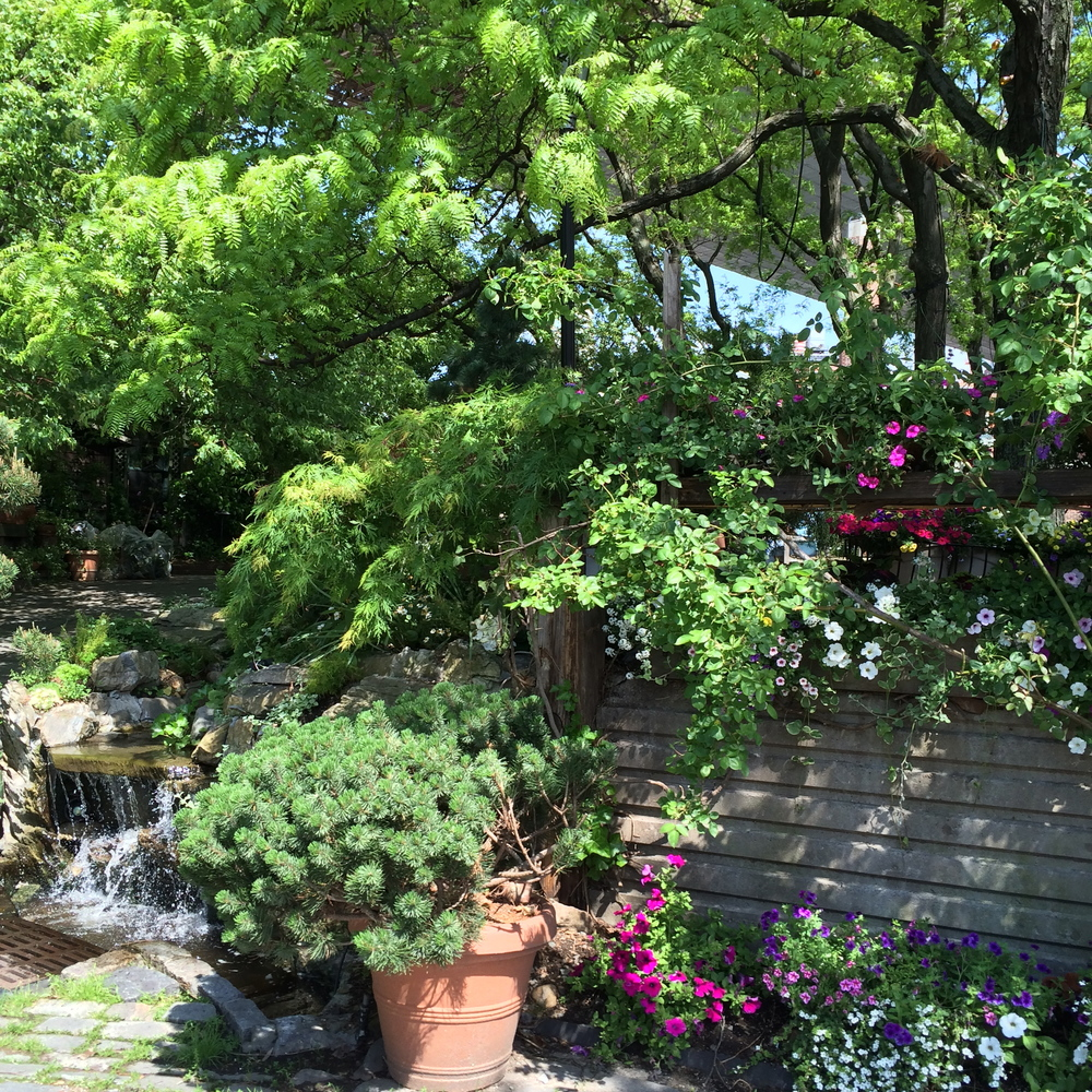 how i wished my yard looked. (this is actually a garden near the river cafe andbrooklyn bridge park in the summer of 2014.)